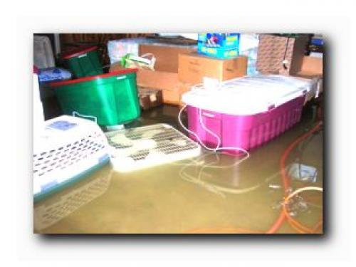Дезинфекция подвала после прорыва канализации. Как очистить подвал после затопления