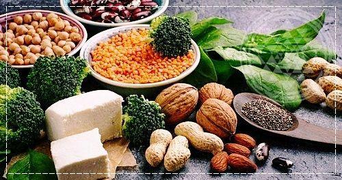 Белок в растительной пище. Белок в растительной и животной пище