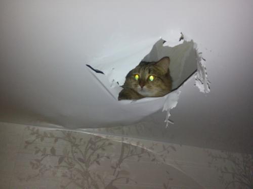 Если порвался натяжной потолок, что делать. Профилактика разрывов