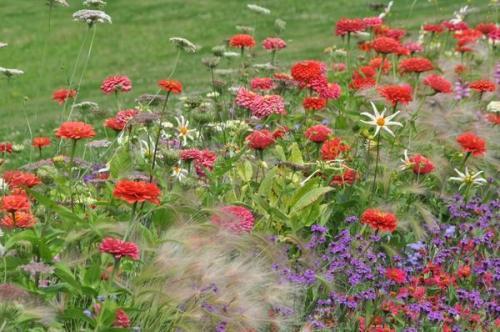 Сад непрерывного цветения многолетников схема посадки. Подбор растений Для клумбы непрерывного цветения можно использовать, как многолетние, так и однолетние, и двулетние растения. Причем рациональнее всего оказывается