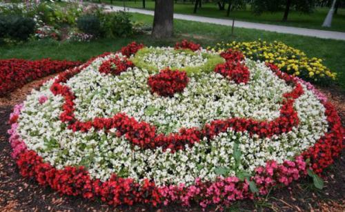 Цветник с многолетними цветами. Однолетники или многолетники — критерии выбора